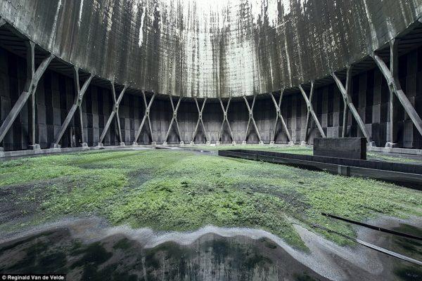 Rong rêu trong tháp giải nhiệt bị bỏ hoang